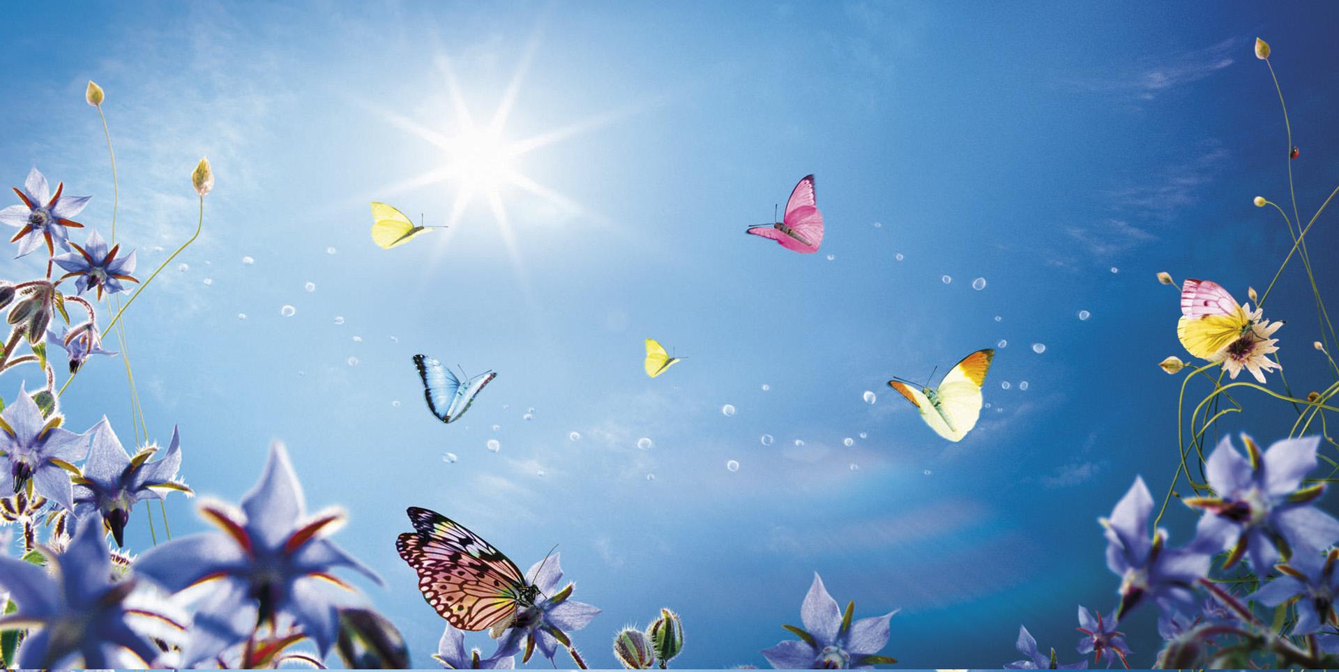 Nadege_Butterflies