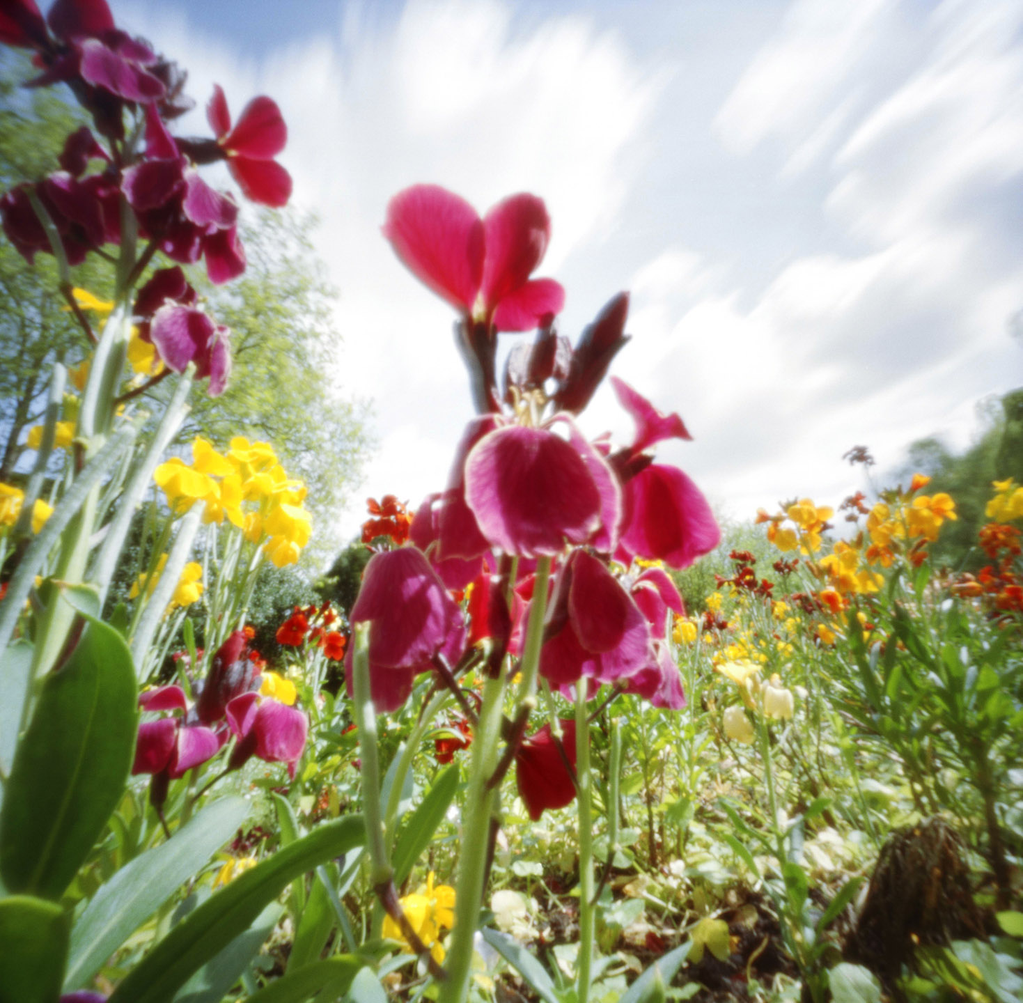 Nadege_brightflowers