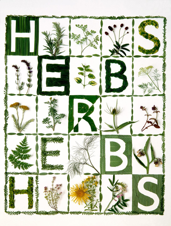 Tessa_Herbs