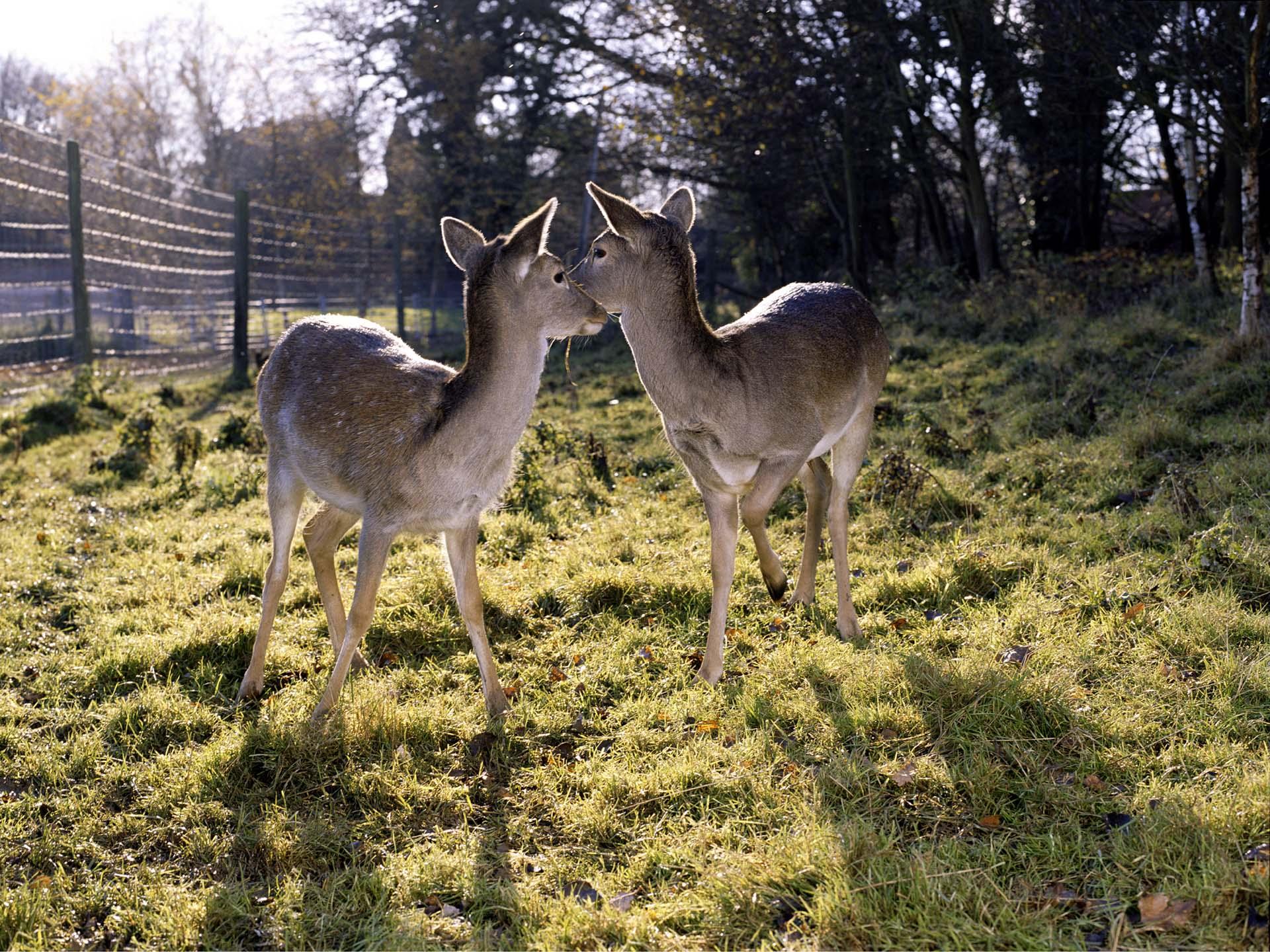 Nadege_Deers