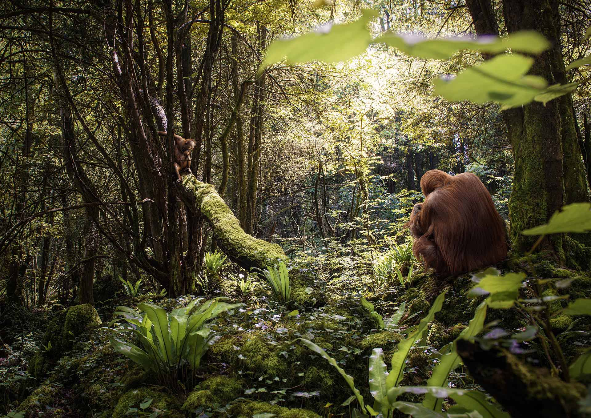 Matt Oranutans Mother ampBaby Orangutan M W
