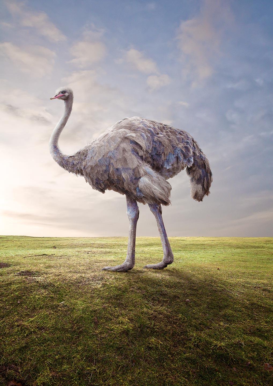 Matt_ostrich