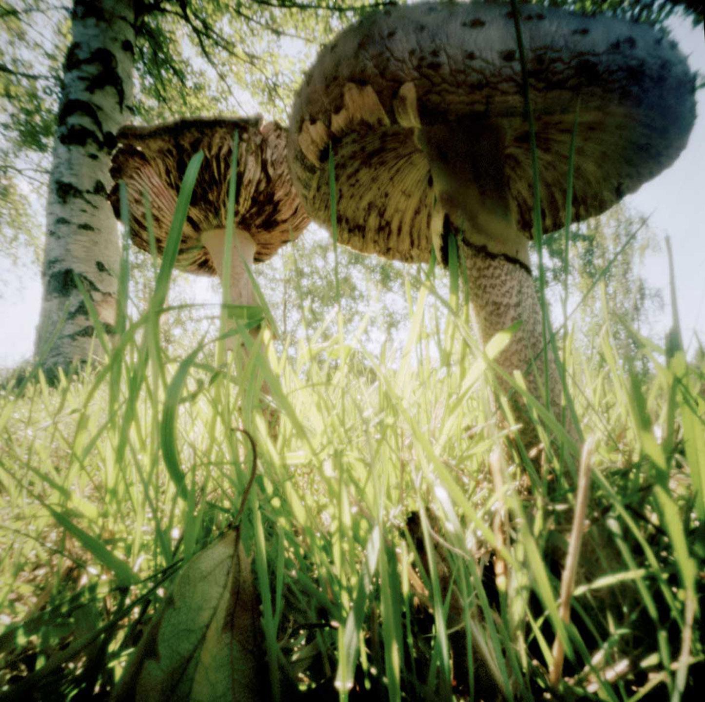 Nadege_Mushrooms