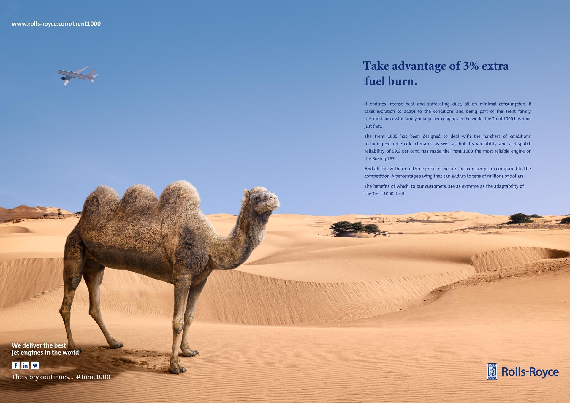 Matt_RR_Camel_3_Humps